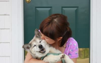 How To Keep Your Senior Pet Healthy As They Age
