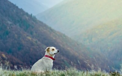 Planning summer travels with your pets? Here are some things to know.