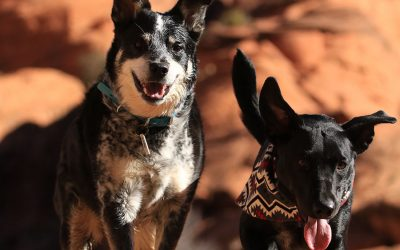 How to Prevent Heatstroke in Dogs and Cats
