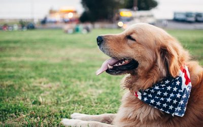 How to Keep Your Pets Safe This Long Labor Day Weekend