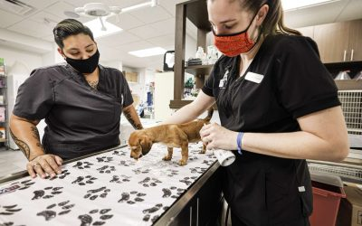 What It's Like Working at PetMedic Hospitals