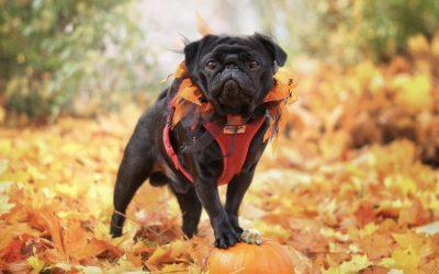 October is Pet Wellness Month!